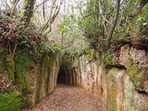Através de oco, uma estrada antiga de Etruscan cinzelou através dos penhascos do tufo em Toscânia imagem de stock