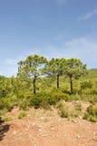 Através do deserto das palmas Imagens de Stock
