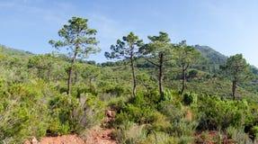 Através do deserto das palmas Fotografia de Stock Royalty Free