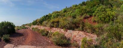Através do deserto das palmas Imagem de Stock Royalty Free