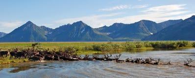 Através do rio Imagem de Stock Royalty Free