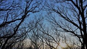 Através dos ramos Fotografia de Stock