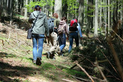 Atravessar a floresta Fotografia de Stock Royalty Free