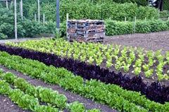 Atribuição orgânica do vegetal e do fruto no verão Foto de Stock