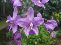 Atrractive-Purpur-Blumen lizenzfreie stockfotos