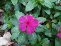 Atrractive-Purpur-Blumen lizenzfreie stockfotografie