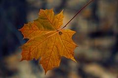 Atrybut jesień Zdjęcia Royalty Free