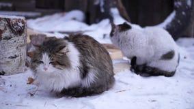 Ats del ¡de Ð que se sienta en la yarda en la nieve almacen de metraje de vídeo