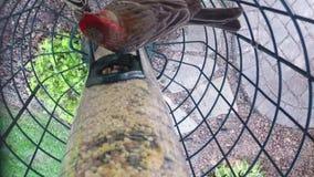 Att äta för fåglar kärnar ur från förlagematare