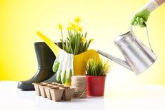 Att arbeta i trädgården begrepp med en person som bevattnar våren, blommar Royaltyfri Fotografi