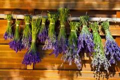 Att att torka hängde upp vädrade lavendelpackar Fotografering för Bildbyråer