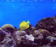 Att att vara under vatten Royaltyfria Foton