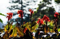 Att bedöva blommar i botaniska trädgårdarna royaltyfria foton