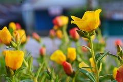 Att bedöva gula blommor i morgonen var så härligt Arkivbilder