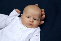 att beundra behandla som ett barn den gulliga faderflickan Arkivfoton