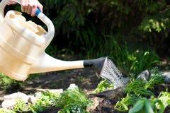 Att bevattna blommar i en trädgård Arkivbild