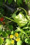 Att bevattna kan i grönsakträdgård Royaltyfri Fotografi