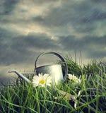 Att bevattna kan med blommor i en sommar regna Arkivfoton