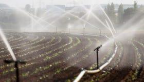 Att bevattna kantjusterar i Västtyskland med bevattningsystemet genom att använda spridare i ett kultiverat fält arkivfoton