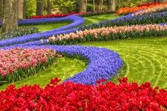Att blomma blommar i Keukenhof parkerar royaltyfri fotografi