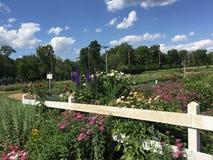 Att blomma blommar nära det vita posteringstaketet i sommar Arkivfoton