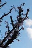 Att blomma fjädrar treen Royaltyfria Foton