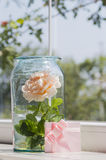 Att blomma steg i den glass kruset, och rosa färger card nära fönster Royaltyfria Bilder