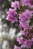 Att blomstra blommar i staden parkerar royaltyfri foto