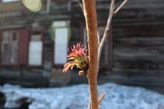 Att blomstra förgrena sig fjädrar in fotografering för bildbyråer