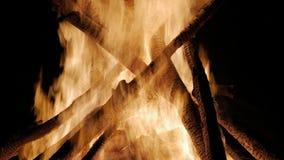 Att bränna loggar in nära övre för orange flammor Röda flammor som svaller upp arkivfilmer