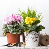 Att bry sig för houseplants Arkivbilder