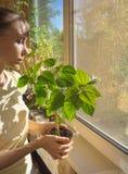 Att bry sig för houseplants i hösten Krukan med en kines steg i hans händer royaltyfri foto