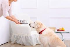 Att bry sig kvinnan som matar hunden Arkivfoto