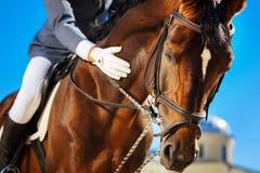 Att bry sig ryttaren som lugnar hans favorit- häst för horserace fotografering för bildbyråer