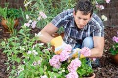 Att bry sig trädgård för man Royaltyfri Fotografi