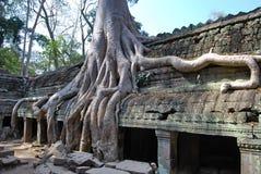 Att dubblera av rotar. Tempel för Ta Prohm Royaltyfri Foto