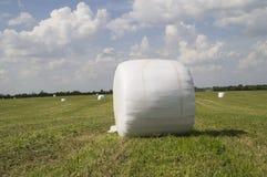 Att förpacka av snittet gräs nytt rund form på fältet Royaltyfri Foto