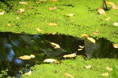 Att falla av lämnar är bevattnar in Arkivfoton