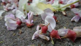 Att falla blommar på jordning efter regnet arkivfoto