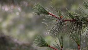 Att falla för hagel sörjer trädfilialer, och att flöda för vatten sörjer filialen med regndroppar 4k lager videofilmer