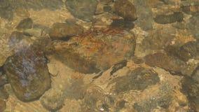 Att flöda för vatten som slås vagga under floden, gör bubblan och att plaska i skog arkivfilmer