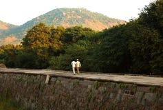 Att gå för två besökare går på den stora väggen för det stora fortet på vellorefortet med solnedgång Arkivfoton