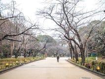 Att gå i Ueno parkerar Arkivfoto