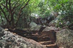 Att gå upp Pidurangalaen vaggar Härlig trappa som leder till och med en skog arkivfoto