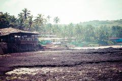 Att gå ut Anjuna strandpanorama på lågvatten med den våta sand för vit och gräsplankokosnöten gömma i handflatan, Goa, Indien Royaltyfria Bilder