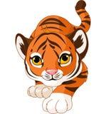 Att huka sig ned behandla som ett barn tigern Fotografering för Bildbyråer