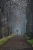 Att jogga i det dimmigt parkerar Arkivfoton