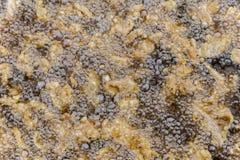 Att knastra/griskött flår djupt att steka i olja i steka för gjutjärn Royaltyfria Bilder