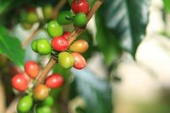 att komma för kaffe låter vara planterar ut fröstemen Arkivfoton