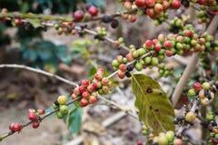 att komma för kaffe låter vara planterar ut fröstemen Arkivbild